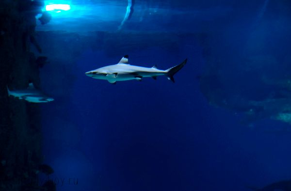 Москвариум фото акула
