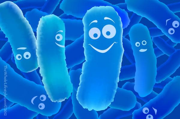 какие пробиотики лучше
