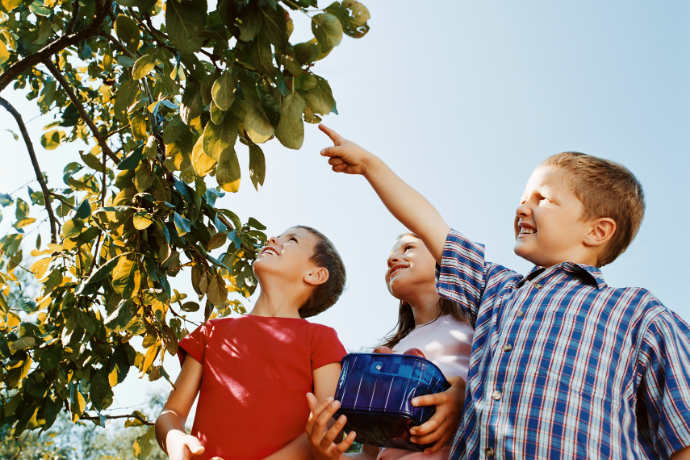 чем полезен витамин с для детей