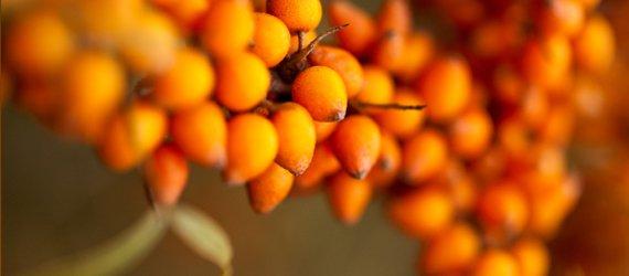 весенние витамины омега 7 масло облепихи