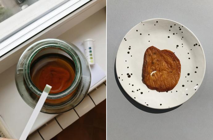 Комбуча чайный гриб