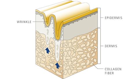 восстановление коллагена, пептиды Verisol
