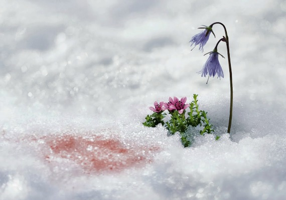 снежные водоросли в косметике