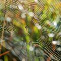 Spider-Silk