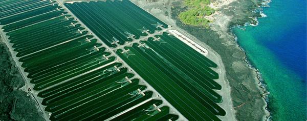 Так выращивают гавайскую спирулину Spirulina Pacifica® от Nutrex Hawaii