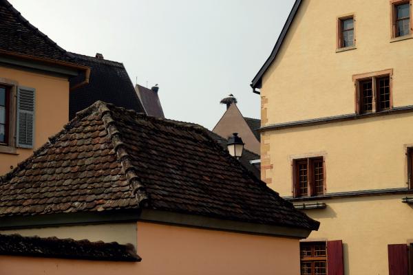 Eguisheim 27