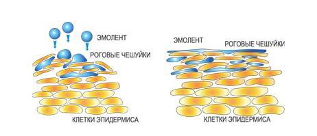 skin oils 2