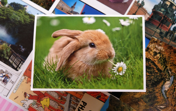 открытка посткроссинг