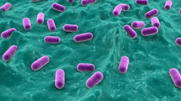 эффективные пробиотики Blis k12