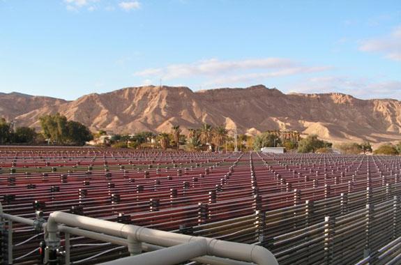 Выращивание Астаксантина в пустыне Израиля