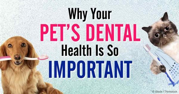 косметика зубная щетка для собак