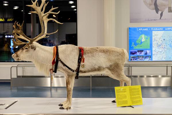 Ruka Finland Day 1-1298