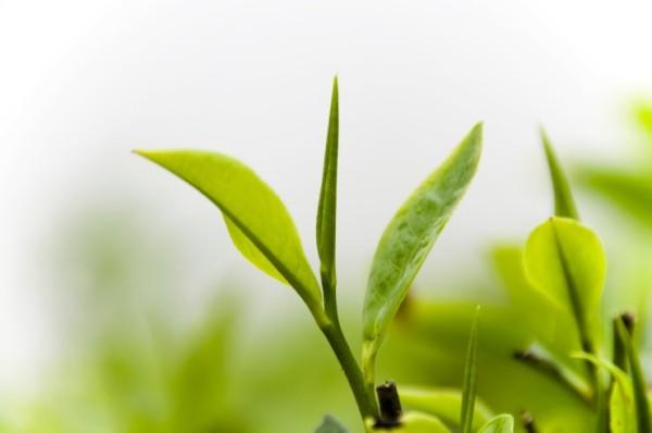 крем для чувствительной кожи, экстракт зеленого чая