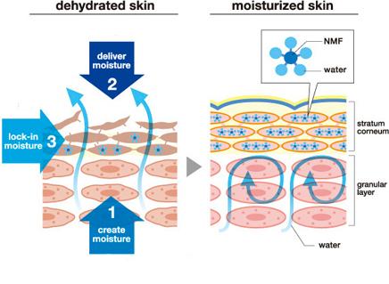 увлажнение кожи основные стратегии