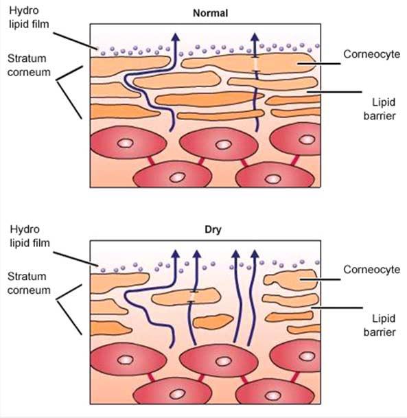 увлажнение кожи лица нормальный процесс